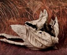 Cercropia-Moonlit-Wheatfield-S.Stephens