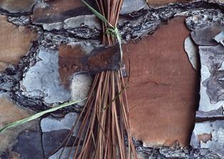 Pine Needle Bundle